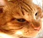 2006年9月4日より保護猫に。