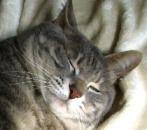 2006年12月25日より再び保護猫に。